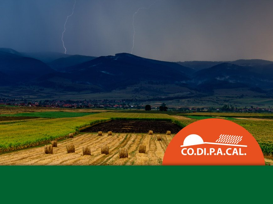 Rischi in agricoltura – gli ultimi danni dell'estate – CODIPACAL
