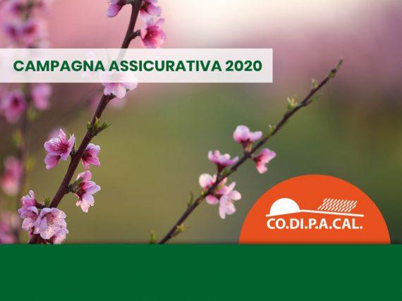 Campagna assicurativa 2020