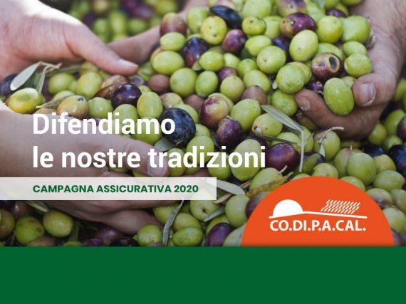 Coltivazione olive
