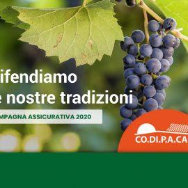 coltivazione uva da vino