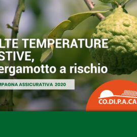 polizza-bergamotto-2020