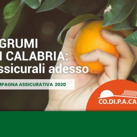 post-blog-agrumi-2