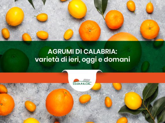 Agrumicoltura in Calabria