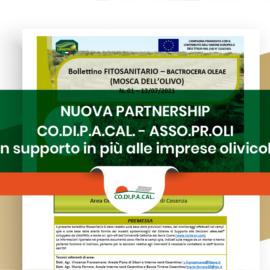 Partnersip Codipacal-Assoproli